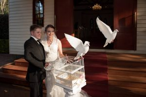 Wedding doves, white doves Brisbane, dove release