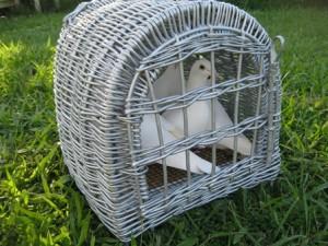 White Doves, white dove release,