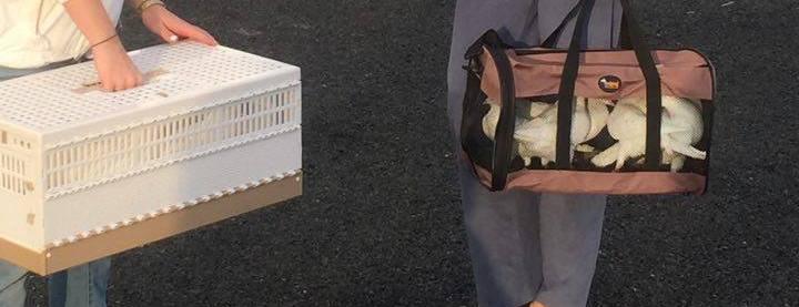 White Doves as passengers