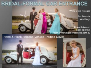limousine-dove-release-3-pics-with-contact-details