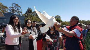 Samoan unveiling, white doves Brisbane, funeral doves